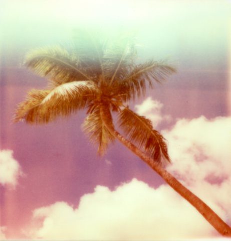 Polaroid Palm Antigua