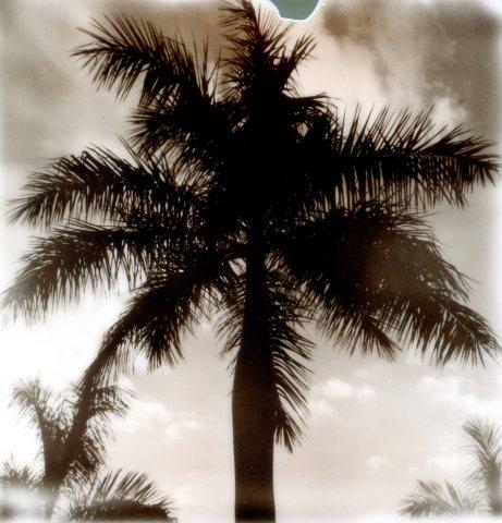 BW Palm